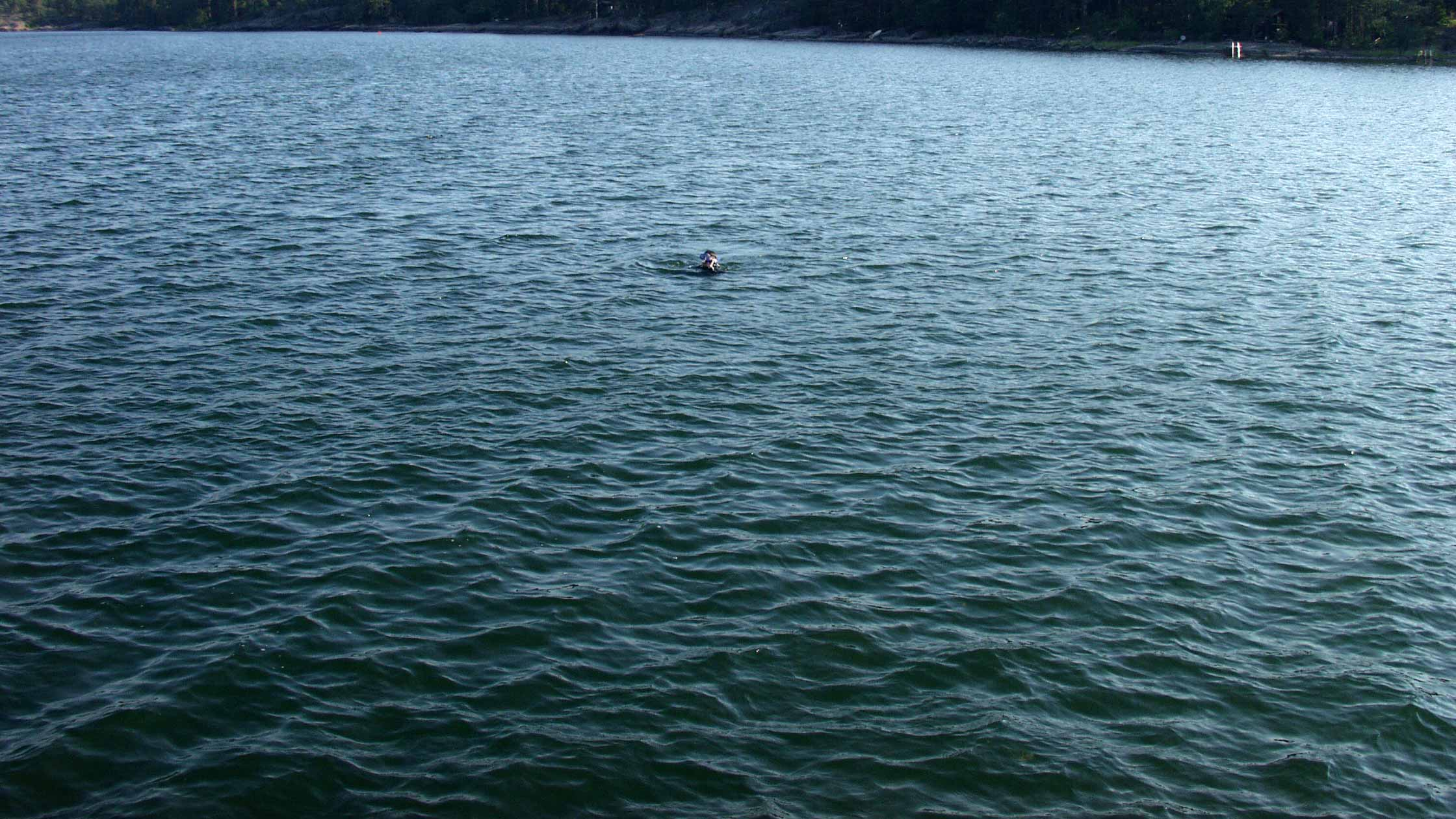 thomas diving